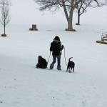 Walking Two Dogs