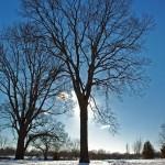Sun Behind Bare Trees