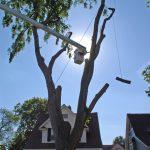 Tree Takedown 2