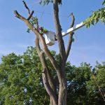 Tree Takedown 3