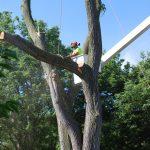 Tree Takedown 4