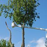 Tree Takedown 5