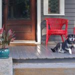 Porch Pooch 2