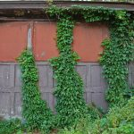 Garage Door Vines