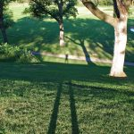 Long Summer Morning Shadows